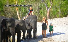 Learn to Riding Elephant (Half Day)