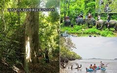 Excursion Trip : Elephant Trekking - Waterfall & Cave - Mangrove