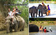 Excursion Trip : Elephant Trekking & Bathing with Elephant