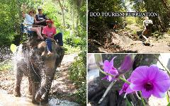 Excursion Trip (Half Day) : Elephant Trekking - Waterfall & Cave - Orchid Farm