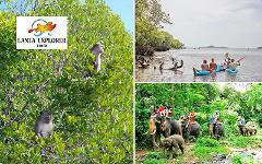 Excursion Trip (Half Day) : 2 in 1 Elephant Trekking - Explore Mangrove (Kayak or Longtail Boat)