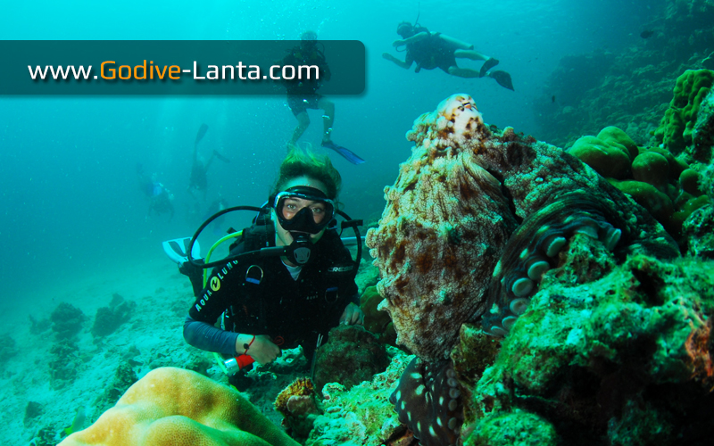 [ Online ] Package Diving - 6 Days 12 Dives