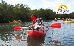 Kayaking Trip (Half Day) : Kayak Around The Mangrove Forest