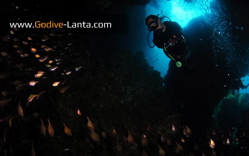 [ Online ] SSI Advanced Adventurer Course PLUS 6 Dives