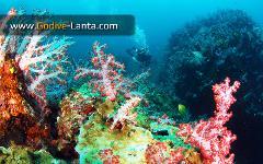 SSI Advanced Adventurer Course 5 Dives