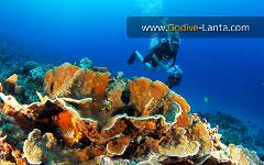 Diving & Snorkelling Trip : Koh Rok on Big Boat