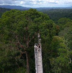 Ulu Temburong National Park (Day Trip)