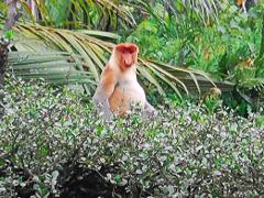 Brunei Essentials (Half Day) + Mangrove Safari
