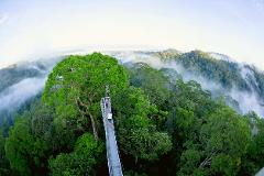 Ulu Temburong National Park Canopy Walk (Day Trip)