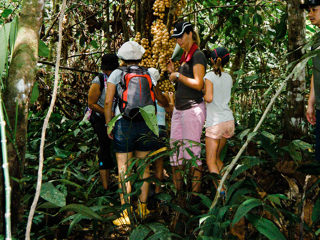Rainforest Discovery (Day Trip)