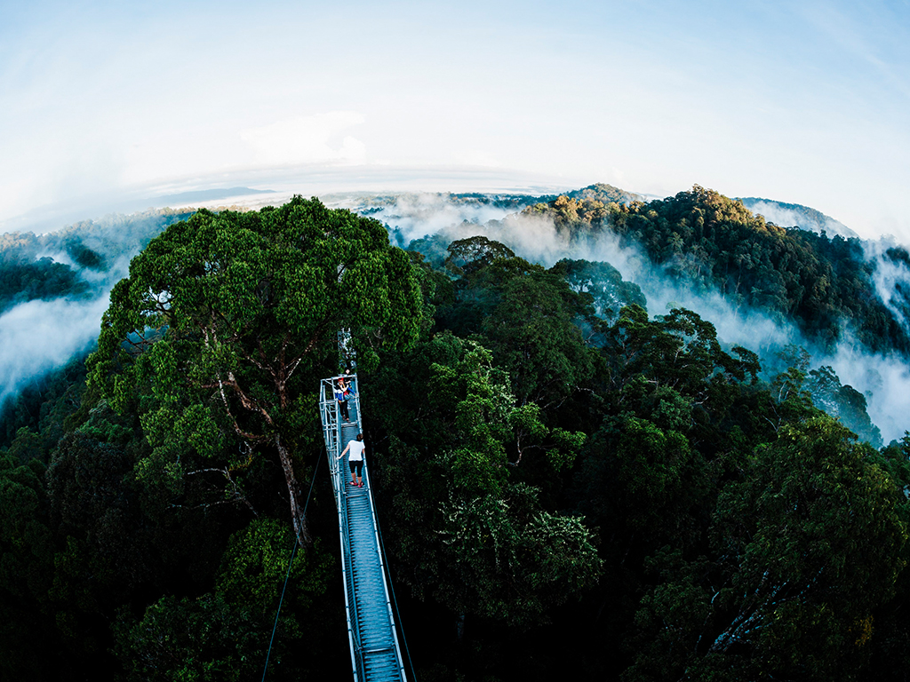 Rainforest Explorer (2D1N)
