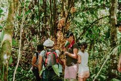 Sumbiling Eco Village & Rainforest Discovery (2D1N)