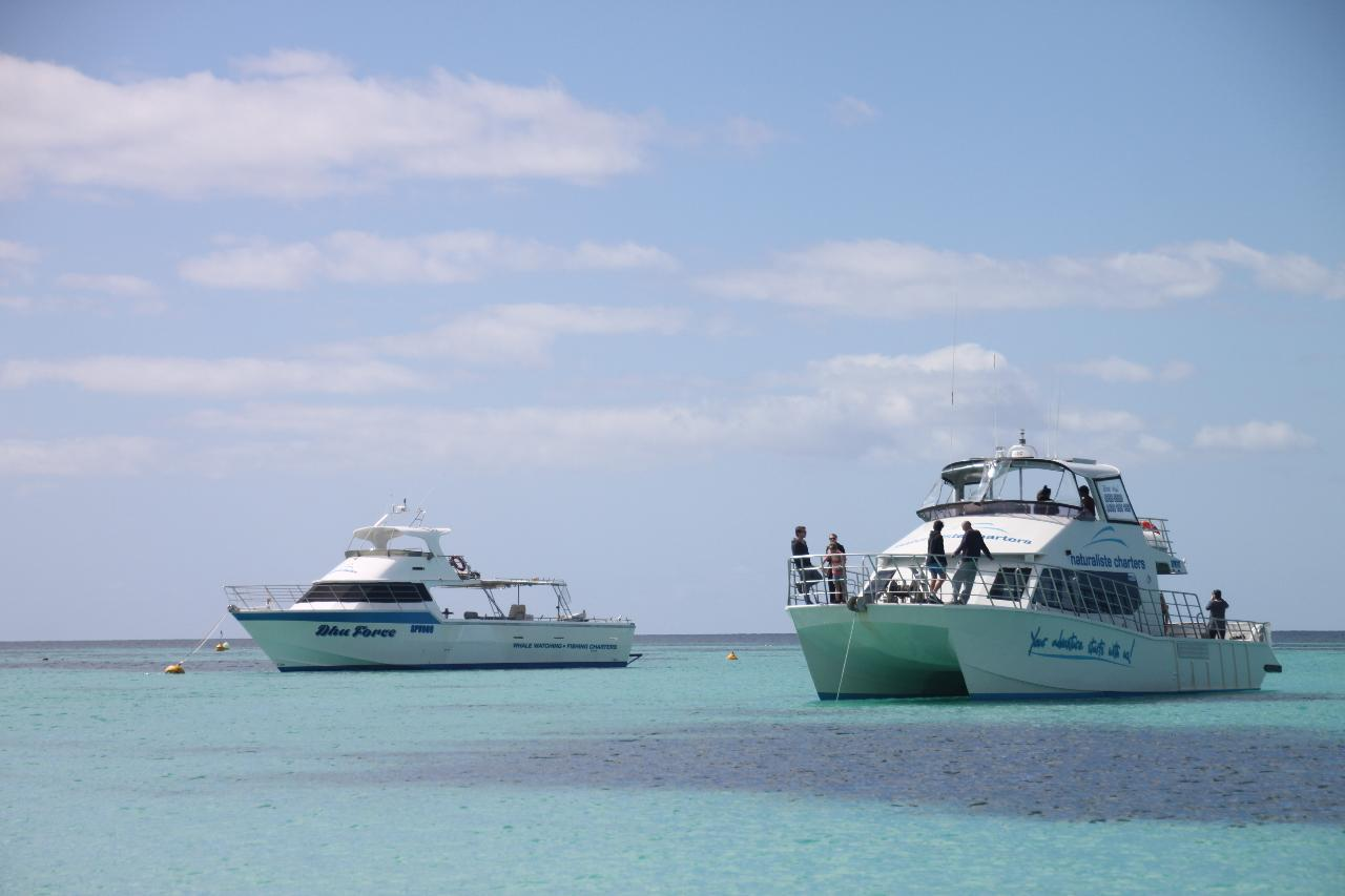 Busselton Skydive and Dunsborough, Busselton or Augusta Whale Watching