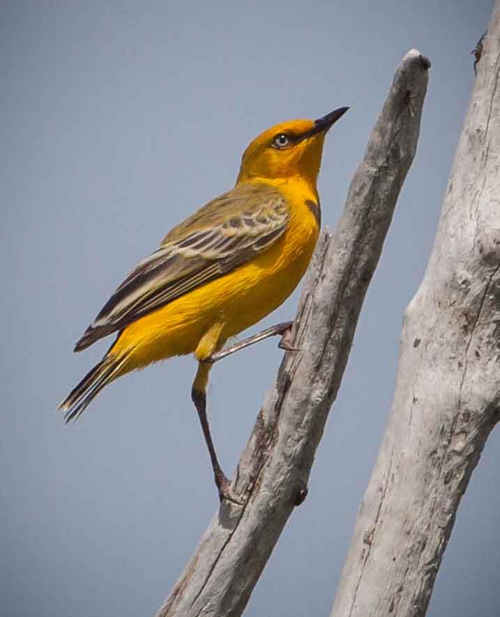 Birdwatching Charter