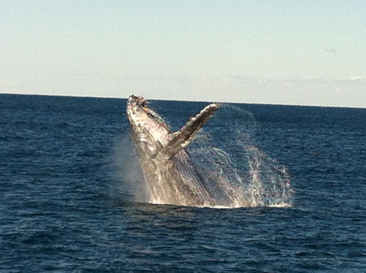 Whale Watching and Coastal Sail