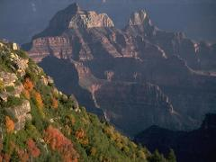 North Rim Fall Colors Photography