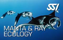 SSI Manta & Ray Ecology