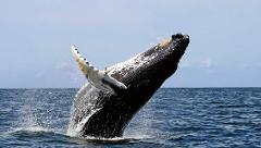 Whale watching tour (Available from July until october 2017)