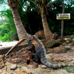 Isla Iguana tour (intermediate)