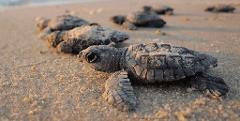 Immersive Turtle Trek (Only Friday, Saturday & Sunday)