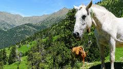 Self guided Families Tour in the Pyrenees 5 days 3 Countries and many Adventures
