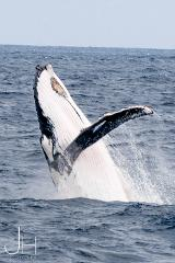 Humpback Whale Swim and Watch Tour