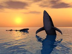 Sunset Humpback Whale Watching Cruise