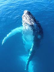 Whale Shark / Humpback Whale / Ningaloo Reef Snorkelling Eco Tour