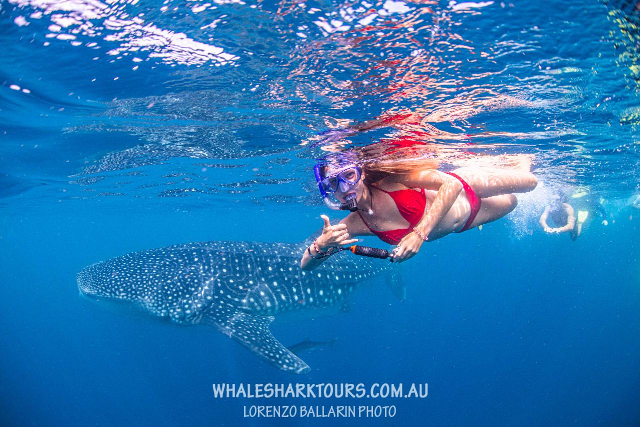Agent Whale Shark Adventure Swims Exmouth  (no observer)