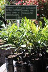 Explore on Macadamia Farm
