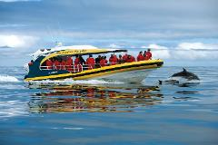 Tasman Island Cruises 3 Hour Cruise - Morning