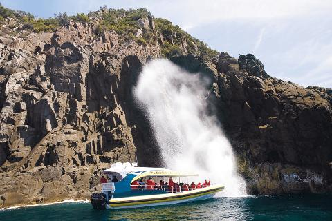 Bruny Island Cruises 3 Hour Cruise with Kettering Bus Pickup Tasmania Australia