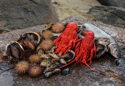 Tasmanian Seafood Seduction Tasmania Australia