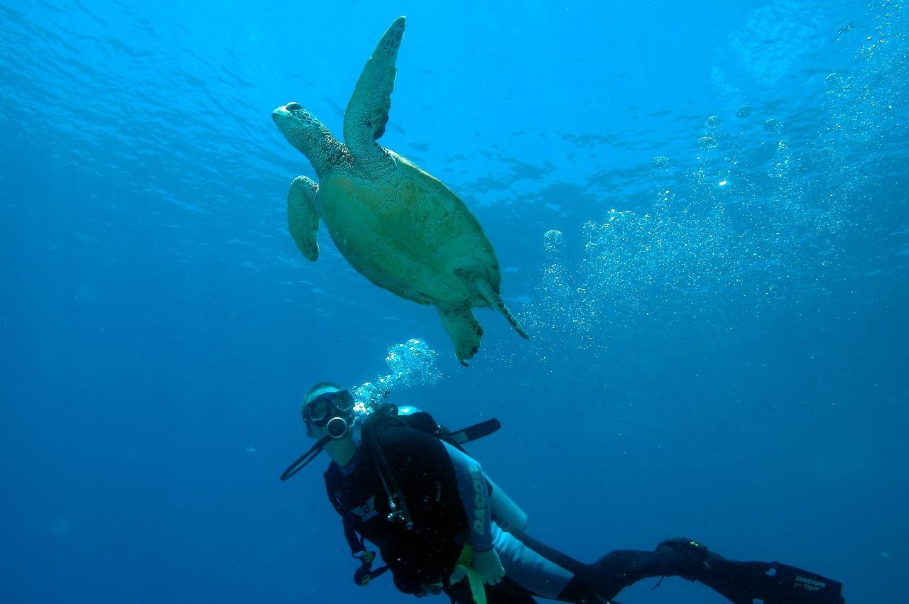 Day Diving Safari