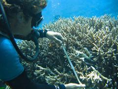 Scientific Research Diver