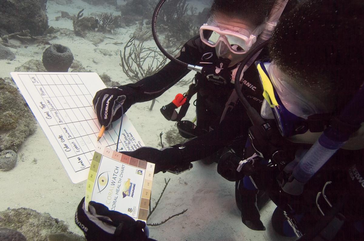 Marine Ecosystems Awareness Diver