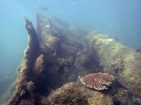 Half-Day Diving Safari