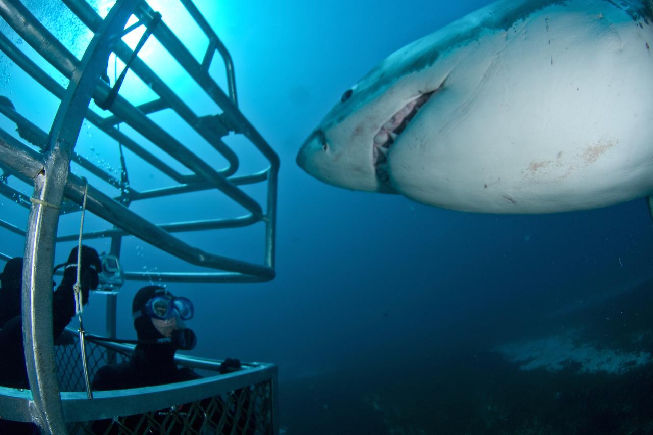 Great White Adventure 3 Days/2 Nights Gift Card SCUBA Diver