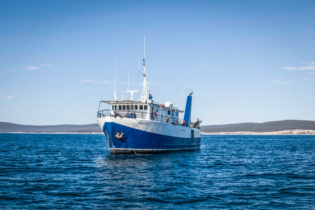 Great White Shark Expedition (6 Nights)