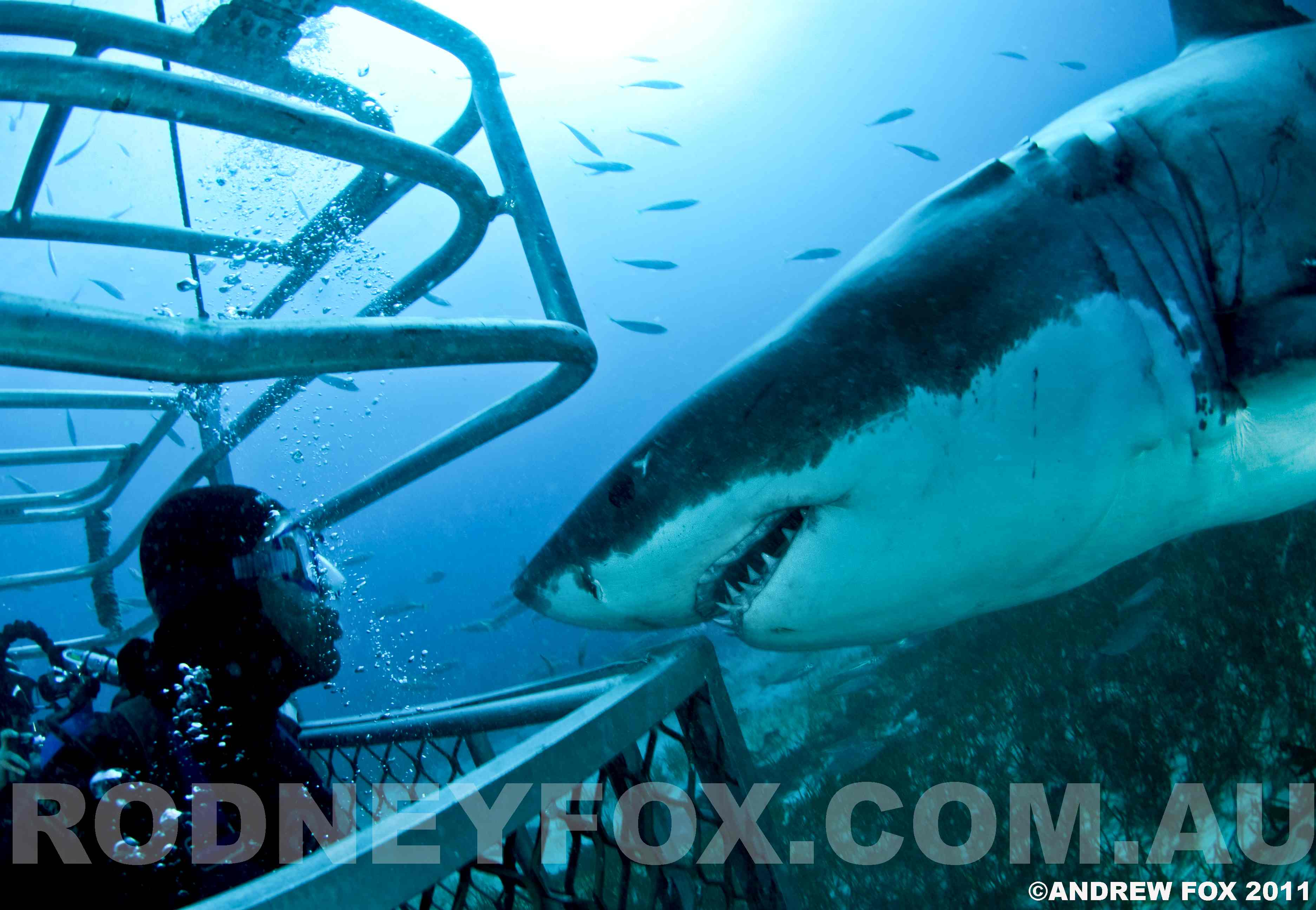 $1000 Rodney Fox Shark Expedition Gift Card