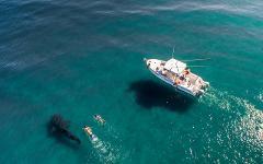 Whale Shark  + Beaches