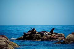 Whale Shark + Espiritu Santo
