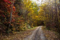 Hyrcanian Forests Adventure Tour from Gilan in Fall