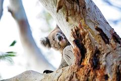 Explore the Wild 4 – A search for 4 of Australia's most famous wildlife icons in the Adelaide Hills
