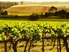 Self drive Barossa Experience - Discover Historic Hutton Vale Farm and Henschke