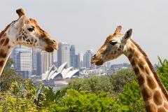 Highlight's of Sydney including visit to Taronga Zoo