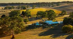 The Perfect Blend - Unearth Barossa's founding family heritage