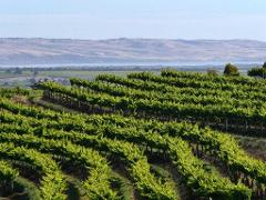Pathways of McLaren Vale – An exceptional wine and food journey