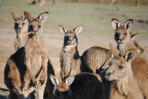 Wildlife and Wilderness Tour of Tasmania – privately guided and includes lunch Tasmania Australia