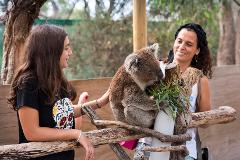 Mornington Peninsula Experience with Wildlife - includes Koala Encounter